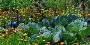 Le Jardin Gourmand à Lalaye